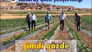 AKSARAY 'ÇİLEK ÜRETİMİNDE BENDE VARIM' DİYOR!
